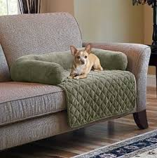 Elevated Dog Beds For Large Dogs Pet Couch Bed Foter