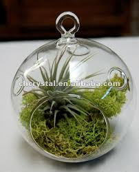 hanging glass terrarium string air plant terrarium hollow globe