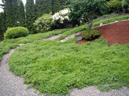 native plant landscaping ideas wshg net blog want carefree gardening tips for ecolawns and