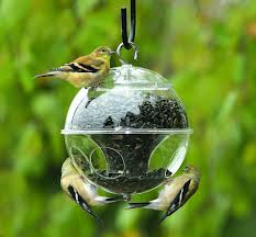 attracting and feeding wild birds in your home backyard at this