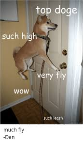 Top Doge Memes - top doge such high very fly wow such leash uick meme com much fly