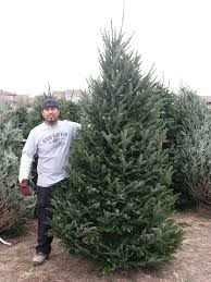 fresh cut christmas trees near me christmas tree nordmann fir