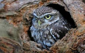 hollow tree trunk bird owl 6924617