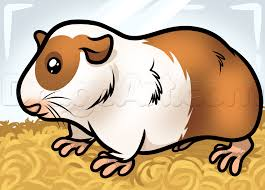 how to draw a guinea pig step by step pets animals free online