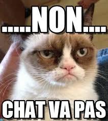 Chat Meme - chat va pas non on memegen