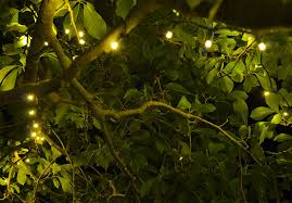 outdoor tree lights for summer tree lights for spring and summer yard envy