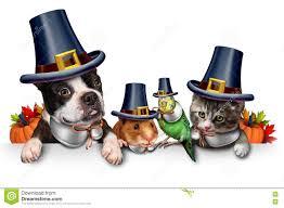 thanksgiving pet celebration stock illustration image 79306008