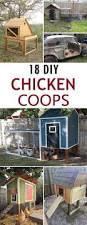 Backyard Chicken Coops Australia by Best 20 Chicken Coups Ideas On Pinterest Chicken Coops Chicken