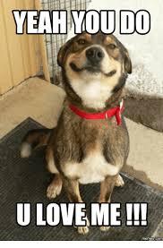 Why You No Love Me Meme - you love me meme 28 images 25 best memes about memes memes meme