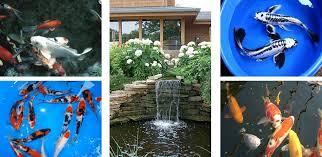 Backyard Pond Supplies by Sunlandwatergardens Com U2013 Pond Supplies U2022 Pond Plants U2022 Pond Fish