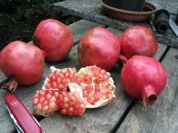 pomegranates edible landscaping