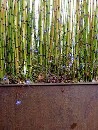 bamboo planter box bamboo plants hq