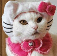cocaine roupa da kitty gatos