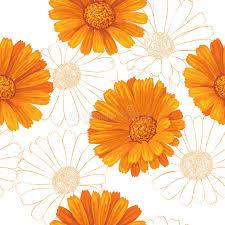 Calendula Flowers Calendula Flowers Pattern Stock Vector Image 48971616