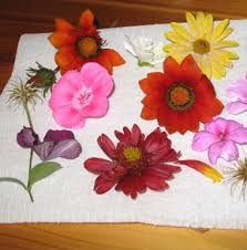 Dry Flowers Planetpals How To Dry Flowers A Recycle Craft
