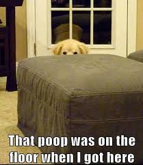 Dog Poop Meme - that poop was on the floor