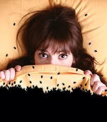 National Bed Bug Registry Bug Bedlam Denver U0027s Bedbug Infestation One Of The Worst In The
