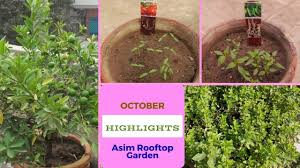 october garden tour my rooftop winter seeds germination youtube