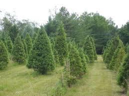 christmas trees greensboro nc christmas lights decoration