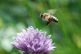 finds gene that helps honey bees find flowers and get back home