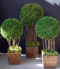 What Is A Topiary Tree 13 Topiary Planter Ideas That Will Have You Priming Your Shears