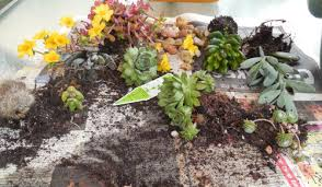 planter for succulents diy succulent strawberry planter the gardening cook