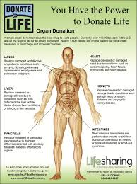 Human Anatomy Liver And Kidneys Best 25 Organ Donation Ideas On Pinterest Organ Transplant