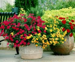 top 10 easy to grow flowering plants inside plants that are easy