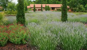 Different Types Of Garden - homelife 22 types of lavender are highlight of garden tour