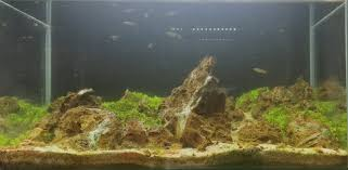 aquadesign the iwagumi style aquascaping