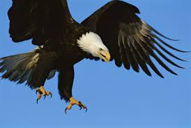 let u0027s not force eagles to fight rogue drones
