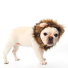 Lion Halloween Costumes Dogs Aliexpress Buy Funny Cute Fancy Pet Hat Costume Cute