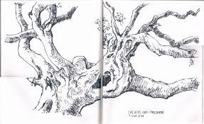 the humble act of sketching los osos oaks