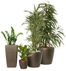 plante pour chambre jardin et potager les plantes s installent sur votre balcon