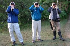 optics and gear bird watcher u0027s digest