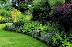 shade garden plants and their applications in the home garden