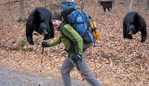 treat snakebite backpacker