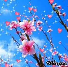 imagenes flores relajantes colegio infantil bilingüe jardin de la vega