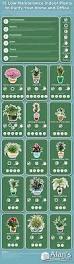 indoor plants infographic