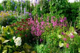 native plants in australia creating a quaint cottage garden