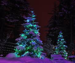 snow holiday christmas tree lights outdoor decorating christmas