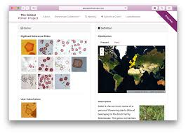 guide global pollen project