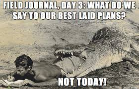 Alligator Meme - just wing it alligator meme on imgur