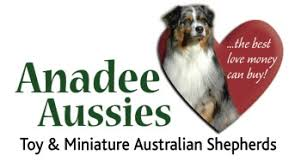 south dakota australian shepherd anadee aussies miniature toy australian shepherds mini