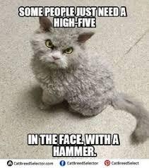 Meme Angry Cat - sad cat memes funny cute angry grumpy cats memes pinterest
