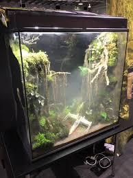 a dagobah system themed terrarium