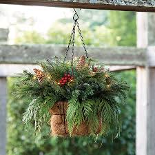 live rose plants perennials gift plants u0026 garden decor