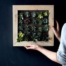 diy vertical succulent garden on food52