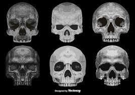 skull vectors 780 free skull vectors