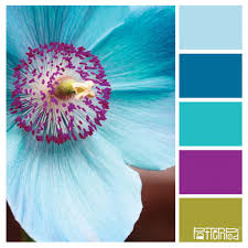Color Palette Ideas For Websites Baby Nursery Sweet Images About Turquoise Colors Midnight Blue